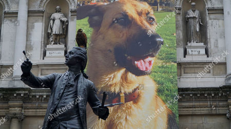 """Stock Photo of A Harris hawk, named Lemmy, stands on top of a statue of Sir Joshua Reynolds in front of """"German Shepherd for Burlington House"""", an 11 meter-long banner print by emerging artist Gina Fischli, at the Royal Academy Schools """"Premiums Interim Projects"""" exhibition at the Royal Academy in London, . The exhibition features the work of 13 second year post graduate students and opens to the public on Friday January 27, running until Sunday February 5"""