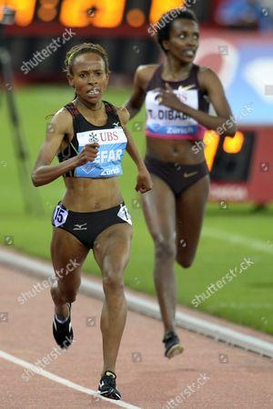 Meseret Defar (l) From Ethiopia Competes in the Women's 5000m Race During the Weltklasse Iaaf Diamond League International Athletics Meeting in the Letzigrund Stadium in Zurich Switzerland 29 August 2013 Switzerland Schweiz Suisse Zurich