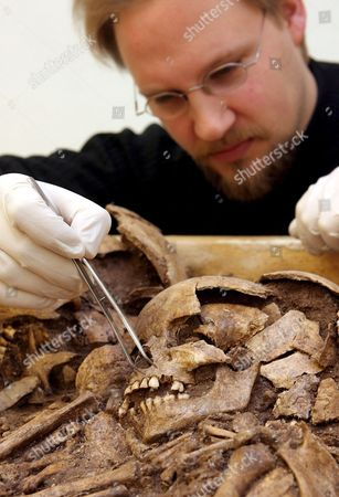 Anthropologist Christian Meyer of the University of Mainz Germany Searches For a Removable Tooth on Remnants Found in the 'Tomb of Eulau' ('grab Von Eulau') in the Statual Museum of Prehistory in Halle Germany Tuesday 17 January 2006 the Biography of the 4 400-years-old Stone Age Man of Eulau Can Be Found in His Teeth Scientists From Mainz Germany the University of Bristol Uk and Halle Germany Examine Four Family Graves with 14 Skeletons of Men Women and Children Found in Summer 2005 in Eulau Germany with the Strontium Isotopy One of the Most Modern Analysis Methods of Archaeology the Scientists Try to Clear if the Stone Age People of Eulau Were Settled There Also Dna Specimen Are Taken Ghana Halle