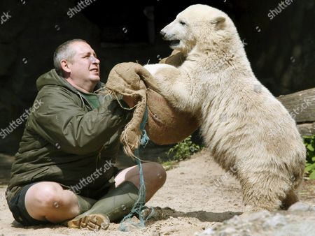Polar Bear Cub 'Knut' Plays with Its Keeper Ronny Henkel at Berlin Zoo Germany 28 June 2007 the Zoo Has Counted 900 000 Visitors Coming to See Knut who Meanwhile Puts 40kg on the Scales Germany Berlin