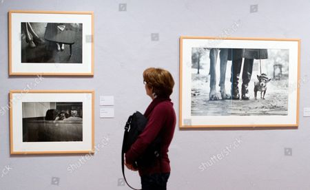 A Woman Looks at Works of the Magnum Photographer Elliott Erwitt at the Art Museum Pablo Picasso in Muenster Germany 28 February 2014 the Museum Currently Hosts the Pablo Picasso Exhibition 'Picasso Sieht Fern!' ('picasso Watches Tv') and an Erwitt Retrospective Which Run From 01 March Until 18 May Germany Muenster
