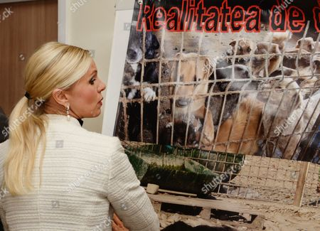 Animal Rights Activist Princess Maja of Hohenzollern Walks Past a Poster of Captured Dogs at an International Press Conference on the Planned Killings of Street Dogs in Bucharest Romanina 22 October 2013 Maja Von Hohenzollern and the European Animal Welfare Association (etn) Campaign For the Abolition of the New Romanian Law on Mass Killings of Street Dogs Romania Bucharest