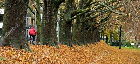 Image result for autumn leaves down an avenue images
