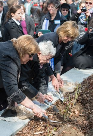 (l-r0 Anna Komorowska Wife of the Polish President Annette Chalut President of the International Ravensbrueck Committee and Survivor of the Ravensbreuck Nazi Death Camp and Daniela Schadt Life Partner of the German President Plant Roses at the Memorial Event For the 70th Anniversary of the Camp's Liberation at the Memorial Site at the Former Womens Nazi Death Camp of Ravensbrueck in Fuerstenberg Germany 19 April 2015 Around 160 Survivors From Around the World Have Returned to Brandenburg For the Anniversary of the Liberation Germany Fuerstenberg