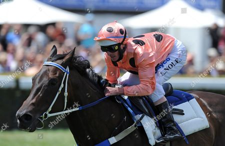 One of the World's Fastest Racehorses 'Black Caviar' Ridden by Jockey Luke Nolen is Taken out For an Exhibition Gallop During the National Jockey's Trust Race Day at the Caulfield Race Course in Melbourne Australia 02 February 2013 Australia Melbourne