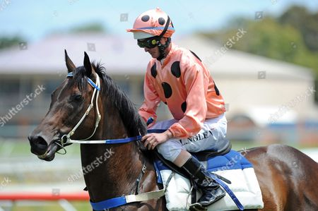 Stock Photo of One of the World's Fastest Racehorses 'Black Caviar' Ridden by Jockey Luke Nolen is Taken out For an Exhibition Gallop During the National Jockey's Trust Race Day at the Caulfield Race Course in Melbourne Australia 02 February 2013 Australia Melbourne