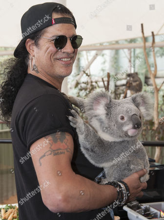 Us Hard Rock Band Guns N Roses Guitarist Saul Hudson Aka Slash Holds His First Koala at the Lone Pine Koala Sanctuary in Brisbane Australia 22 August 2012 Slash was at the Sanctuary to Help Launch the Bob Irwin Wildlife and Conservation Foundation Australia Brisbane