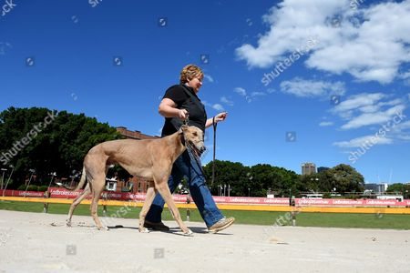 Greyhound Breeder and Trainer Annette Fleming Walks with Her Dog Jett at Wentworth Park Race Track in Sydney New South Wales (nsw) Australia 11 October 2016 Nsw Premier Mike Baird Has Performed an Extraordinary Backflip on His Greyhound Racing Ban After Yielding to Sustained Industry and Media Pressure Australia Sydney