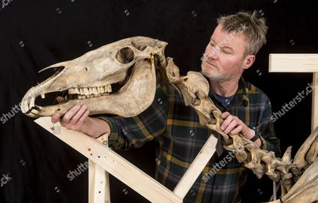 Conservator Derek Bell at work on the famous skeleton