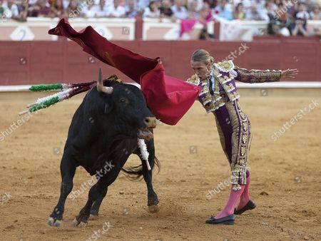 Spanish Bullfighter Cristina Sanchez Fights Against Her First Bull During the Feria De San Jualian Bullfighting in Cuenca Spain 20 August 2016 Spain Cuenca