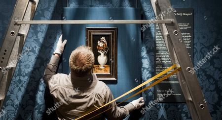 An Employee Hangs the Painting Naricissen Maagdenpalm En Naricissen Maagdenpalm En Viooltjes in Een Kan (narcissus Periwinkle and Violets in a Can C 1562) of the German Painter Ludger Tom Ring Ii (1522-1584) in the Mauritshuis the Hague the Netherlands 16 April 2015 the Painting was Bought During an Auction of the Foundation Vrienden Van Het Mauritshuis (friends of the Mauritshuis) Netherlands the Hague