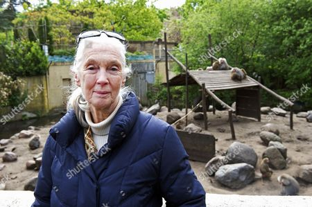 British Primatologist Dame Jane Goodall During a Visit to Gaia Zoo in Kerkrade the Netherlands 18 May 2012 Goodall is on a Three-day Visit to the Netherlands Netherlands Kerkrade