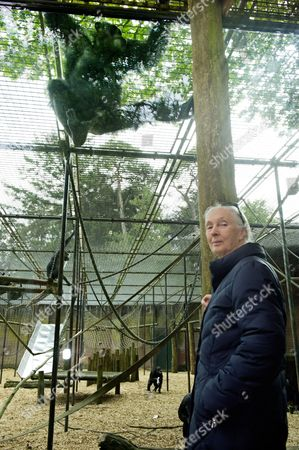 Stock Photo of British Primatologist Dame Jane Goodall During a Visit to Gaia Zoo in Kerkrade the Netherlands 18 May 2012 Goodall is on a Three-day Visit to the Netherlands Netherlands Kerkrade