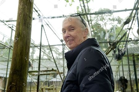 Stock Image of British Primatologist Dame Jane Goodall During a Visit to Gaia Zoo in Kerkrade the Netherlands 18 May 2012 Goodall is on a Three-day Visit to the Netherlands Netherlands Kerkrade