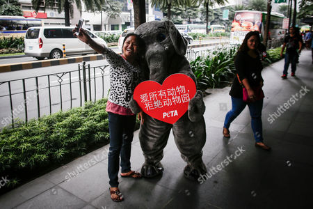 A woman takes a selfie with an animal rights advocate from People for the Ethical Treatment of Animals (PETA) dressed as an elephant during a demonstration in Makati City, south of Manila, Philippines, 13 February 2017. Members of PETA encouraged the public to show compassion to all living things as Valentine's day approaches. Wearing different animal costumes, the animal rights advocates carried signs in various languages and went around the business district of Makati dancing and giving hugs.