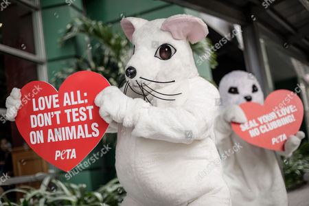 Animal rights advocates from People for the Ethical Treatment of Animals (PETA) dressed as a rat and a seal hold placards during a demonstration in Makati City, south of Manila, Philippines, 13 February 2017. Members of PETA encouraged the public to show compassion to all living things as Valentine's day approaches. Wearing different animal costumes, the animal rights advocates carried signs in various languages and went around the business district of Makati dancing and giving hugs.