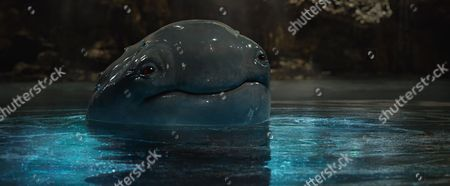 Stock Photo of The creature