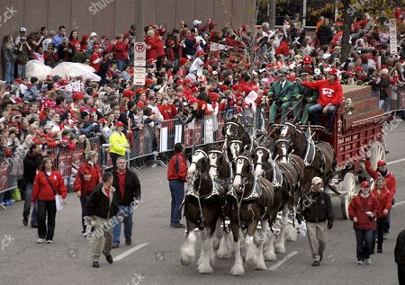 The Anheuser-busch Clydesdale Hitch and Wagon Lead Off the Parade Celebrating the St Louis Cardinals Winning the 2011 World Series Near Busch Stadium in St Louis Missouri Usa on 30 October 2011 Team Manager Tony Larussa Rides on the Wagon the Cardinals Defeated the Texas Rangers 6-2 28 October 2011 to Win the Best-of-seven World Series 4-3 United States St. Louis