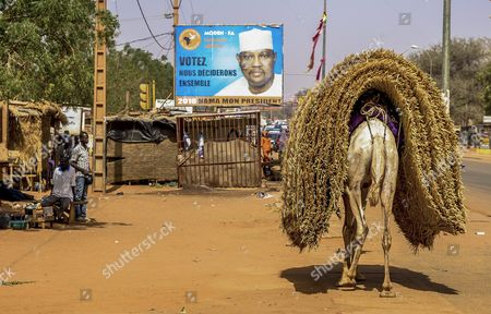 Stock Photo of A Camel Carries Straw Towards a Campaign Poster For Presidential Candidate Hama Amadou Which Reads in French ' Vote We Will Decide Together ' in Niamey Niger 13 February 2016 Amadou is Running His Campaign From Jail on Accusation of Child Trafficking Opponents of Incumbent President Issoufou Mahamadou Consider Him a Political Prisoner Presdential Elections Take Place on 21 February 2016 with President Issoufou Mahamadou One of the Favorites to Win As He Seeks His Second Term in Office Niger Niamey