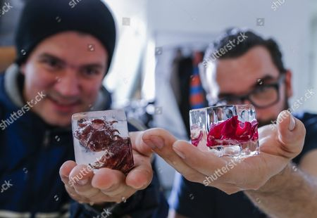 Co-owners Fabian Alvarez (l) and Carlos Leal (r) Hold Cubes of Ice Infused with Hibiscus and Rose Petals at Mixology Ice in Miami Florida Usa 18 March 2016 Mixology Ice Provides Handcrafted Custom Ice Cubes to a Variety of High End Restaurants in the Miami Area the Pristine Cubes and Spheres of Ice Include Water That Has Been Filtered Many Times to Eliminate Visual and Taste Impurities United States Miami