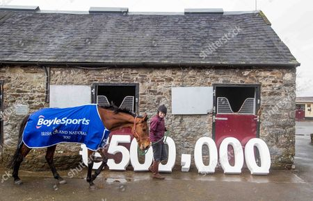 Stock Image of Launch Of The 2017 Boylesports Irish Grand National at trainer Mouse Morris's stables. The 2017 Boylesports Irish Grand National was launched today at the famous Everardsgrange Yard outside Fethard in Co Tipperary. Affectionately known as ?The Race of the People? the Irish Grand National which takes place on Easter Monday 17th April is now the richest jumps race in Ireland worth ?500,000 and the last two winners Rogue Angel and Thunderandroses are trained by Mouse Morris Pictured today is Sarah Smyth with 2016 Fairyhouse Boylesports Irish Grand National Winner, Rogue Angel
