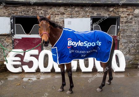 Stock Picture of Launch Of The 2017 Boylesports Irish Grand National at trainer Mouse Morris's stables. The 2017 Boylesports Irish Grand National was launched today at the famous Everardsgrange Yard outside Fethard in Co Tipperary. Affectionately known as ?The Race of the People? the Irish Grand National which takes place on Easter Monday 17th April is now the richest jumps race in Ireland worth ?500,000 and the last two winners Rogue Angel and Thunderandroses are trained by Mouse Morris Pictured today is Sarah Smyth with 2016 Fairyhouse Boylesports Irish Grand National Winner, Rogue Angel