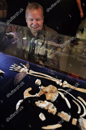 Us Professor Lee Berger Looks at the Fossilized Skeleton of Australopithcus Sediba at the University of the Witwatersrand in Johannesburg South Africa 08 September 2011 Berger and His Nine-year-old Son Matthew Discovered the Fossils at a Site at Malapa North of Johannesburg in 2008 a Close Examination of Two Partial Fossilized Skeletons of a Sediba Suggests These Creatures who Roamed the Earth Some 1 9 Million Years Ago Were Crafting Tools Even Earlier and Could Be the First Direct Ancestor of the Homo (human) Species Based on the Most Complete Hand Specimen Ever Found a Sediba Had an Extra-long Thumb and Powerful Fingers Which It Could Have Used to Make Tools Despite Still Having a Small Ape-like Brain Suggested Findings by Berger's Team Published in the Journal Science South Africa Johannesburg
