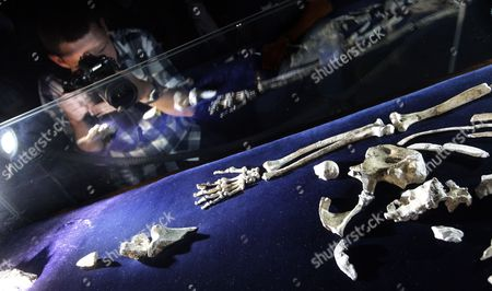 A Photographer Takes Pictures of Parts of a Fossilized Skeleton of Australopithcus Sediba on Display at the University of the Witwatersrand in Johannesburg South Africa 08 September 2011 Us Professor Lee Berger and His Nine-year-old Son Matthew Discovered the Fossils at a Site at Malapa North of Johannesburg in 2008 a Close Examination of Two Partial Fossilized Skeletons of a Sediba Suggests These Creatures who Roamed the Earth Some 1 9 Million Years Ago Were Crafting Tools Even Earlier and Could Be the First Direct Ancestor of the Homo (human) Species Based on the Most Complete Hand Specimen Ever Found a Sediba Had an Extra-long Thumb and Powerful Fingers Which It Could Have Used to Make Tools Despite Still Having a Small Ape-like Brain Suggested Findings by Berger's Team Published in the Journal Science South Africa Johannesburg