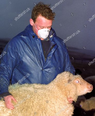 A Shetland Island Crofter Jim Blacks Wears a Protective Mask As He Inspects One of His Flock For Oil Contamination Britain 08 January 1993 As Hurricane-force Winds Brought Oil Onto the Rocks and Nearby Pasture Land the Island Feared Severe Air and Ground Pollution After the Oil Tanker Brear Hit the Coastline January 5 Spilling Its Cargo of 85 000 Tons of Light Crude Oil Into the Sea United Kingdom