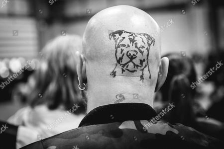 Crufts 2017 Day 1 ( the Terrier & hound day) - A dog enthusiast with a Pit Bull Terrier tattoo on his head Dogs relaxing before competing on day 1 of Crufts 2016 ( the Terrier & hound day) at the NEC, Birmingham, United Kingdom on March 09th 2017. The largest dog show in the world Crufts showcases more than 22,000 competing dogs over 4 days all competing to be crowned the over all winner 'the best in show'.