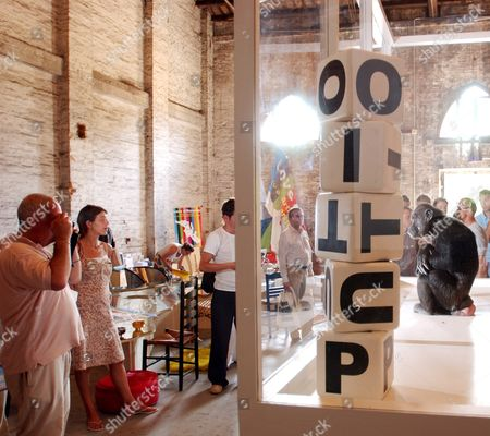 Monkey 'Lala' Sits in a Cage During Art Performance 'Spelling U-t-o-p-i-a 2003' by Ingar Dragset and Michael Elmgreen Friday June 13 2003 in Utopia Station at the Venice Biennale Italy (keystone/gaetan Bally) Italy Venedig