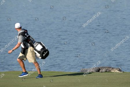 John Yarborough, caddie for golfer Smylie Kaufman, runs away from an alligator after unexpectedly seeing it lying on the bank of a lake while walking along the sixth fairway during the second round of the Arnold Palmer Invitational golf tournament in Orlando, Fla