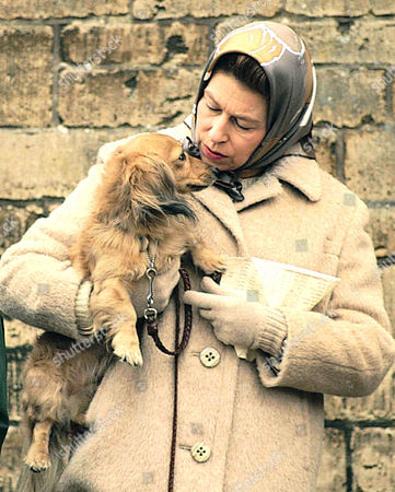 A loving picture of dog and owner.   The Queen with one of her dogs at Badminton 1976 MUST CREDIT:  REGINALD DAVIS