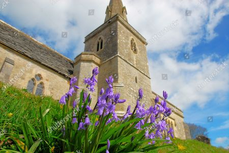 Early-flowering bluebells on a sunny Spring day, St Michael and All Angels, Little Bredy, Dorset