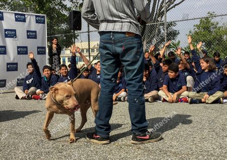 """Kids belonging to the YMCA get a demonstration on how to approach and be safe around dogs with pit bull """"Lucy,"""" as part of the U.S. Postal Service """"National Dog Bite Prevention Week,"""" during an awareness event at the YMCA in Los Angeles . Dog attacks on postal workers rose last year to 6,755, up 206 from the previous year and the highest in three decades, as internet shopping booms and consumers increasingly demand seven-day-a-week package delivery and groceries dropped at their doorstep. Overall, an estimated 4.5 million Americans are bitten by dogs annually, mostly children. In the last year, dog attacks on carriers rose 3 percent"""