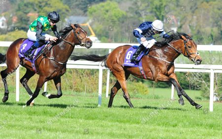 LEOPARDSTOWN. REKINDLING and Wayne Lordan (right) win the Group 3 P.W. McGrath Memorial Ballysax Stakes from Douglas Macarthur. HEALY RACING