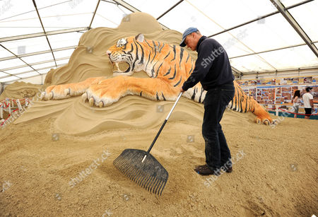 World renowned sand sculptor Mark Anderson puts the finishing touches to his painted Bengal Tiger on the opening weekend of Sandworld in Weymouth, Dorset, UK