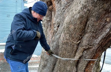 Kevin Martin, state coordinator for New Hampshire's Big Tree Program, measures the circumference of a horse chestnut tree on the ground of the historic Moffatt-Ladd house in Portsmouth, N.H. The program encourages residents to search their city's streets, backyards and woods for the state's largest trees