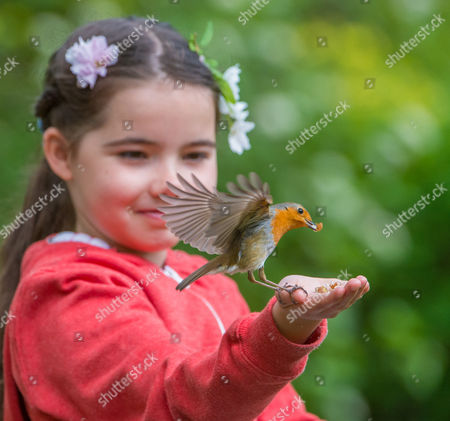 Stock Picture of 8 Year old Emily Rose lets a robin feed from her hand.