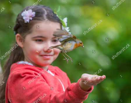 8 Year old Emily Rose lets a robin feed from her hand.