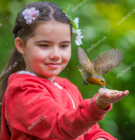Stock Photo of 8 Year old Emily Rose lets a robin feed from her hand.