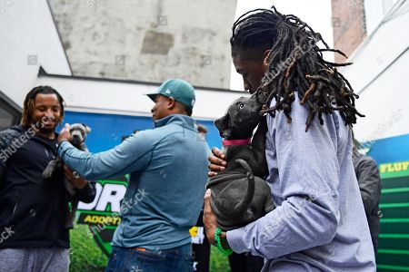 """IMAGE DISTRIBUTED FOR DISCOVERY COMMUNICATIONS - Ron Brooks, Philadelphia Eagles cornerback, has his hair tugged at by a puppy at the Morris Animal Refuge in Philadelphia. Animal Planet and Morris Animal Refuge hosted an adoption event to the public with a mock NFL """"draft."""" With the help from over 150 attendees, current Philadelphia Eagles NFL players evaluated and chose their team lineup amongst adoptable animals. All 14 puppies were adopted"""