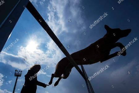 Dog 'Excited Lu vom Hause Guertler' jumps over a hurdle besides her owner Ina Mueller of Germany during the practice at the Belgian Shepherd World Championships in Halle (Saale), Germany, . Dog sportsmen from 40 countries take part at the six different competitions until April 30, 2017