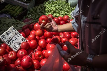 A Chinese customer chooses tomatoes in a market in Beijing, China, 10 May 2017. China's consumer price index (CPI), a main gauge of inflation, in April rose 1.2 percent on year after gaining 0.9 percent in March. The producer price index (PPI) in April rose 6.4 percent from a year earlier, according to figures released by the National Bureau of Statistics on 10 May.