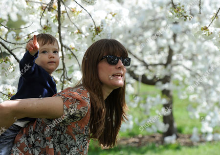 Editorial photo of Jack Cantor Aged 1 And Mum Danielle Cantor 34 From New Jersey Under The Cherry Blossom Trees In Kew Gardens Kew Gardens Cherry Blossom Trees Are In Bloom Around The Royal Botanical Grounds. 2016/04/19 Picture By Georgie Gillard.