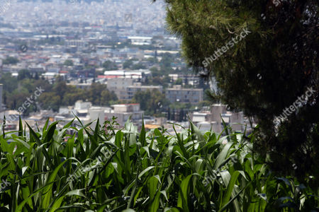 Corns and other plants are planted in the garden named 'The Theater of Disappearance' which is a major site-specific installation by Argentinian artist Adrian Villar Rojas, commissioned and organized by NEON, around the National Observatory of Athens, Greece, 01 June 2017 (issued 02 June 2017). This commission sees him negotiating with an archaeological site for the first time as he radically alters both the indoor and outdoor space of the National Observatory.