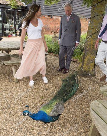 Editorial image of Prince Charles visit to Jimmy's Farm, Ipswich, UK - 05 Jun 2017