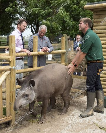 """Prince Charles, Patron, The Rare Breeds Survival Trust, visited Jimmy's Farm and met the trust's new President, Jimmy Doherty, and learned about the farm's education and rare breeds programme.""""Teddy"""" the South American Tapir"""