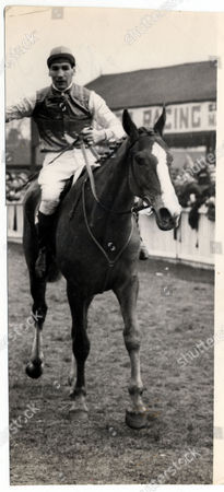 Racehorse: Royal Tan Ridden By Brian Marshall.