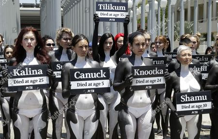 Canadian model Jayde Nicole  who is painted as an orca whale holds a sign with the name of 'Tilikum' ,an orca whale that died in captivity at SeaWorld, as she joined 38 other PETA (People for the Ethical Treatment of Animals) activists who held a die-in to protest the captivity of orca whales at Sea World  outside the Los Angeles County Museum of Art in Los Angeles, California, USA, 07 July 2017.